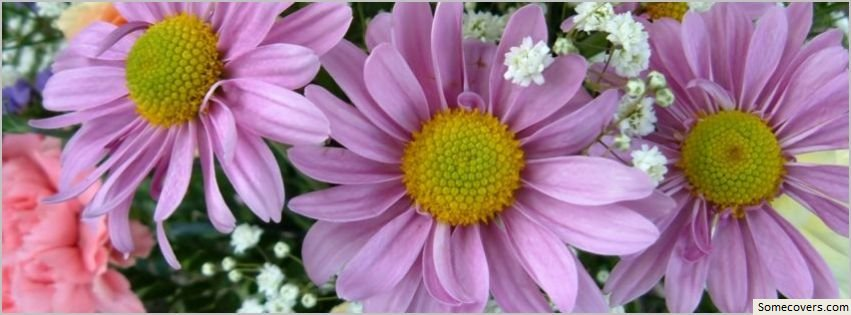Pink Flowers Facebook Timeline Cover Facebook Covers - myFBCovers
