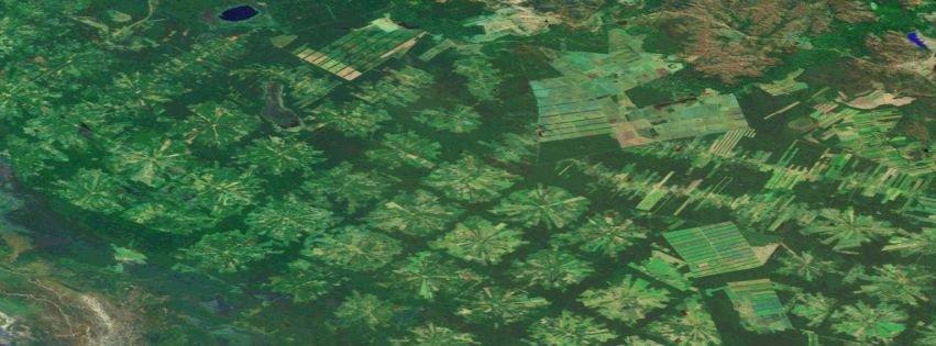 Pin Amazon Rainforest Food Web Rain Season Site on Pinterest