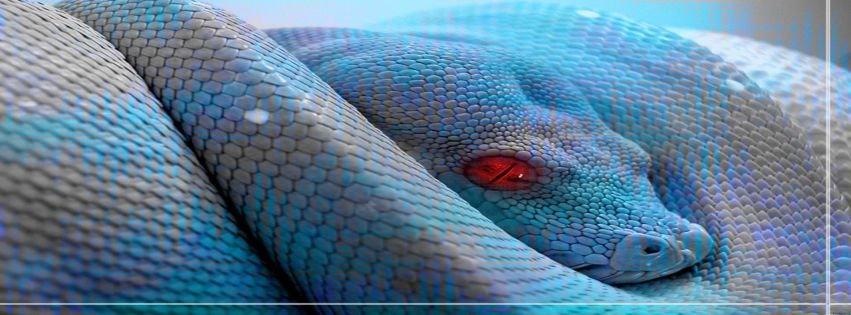Animals Reptiles Blue Snake Wallpaper Facebook Covers