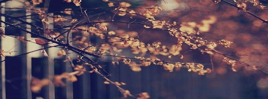 Beautiful Facebook Covers Myfbcovers