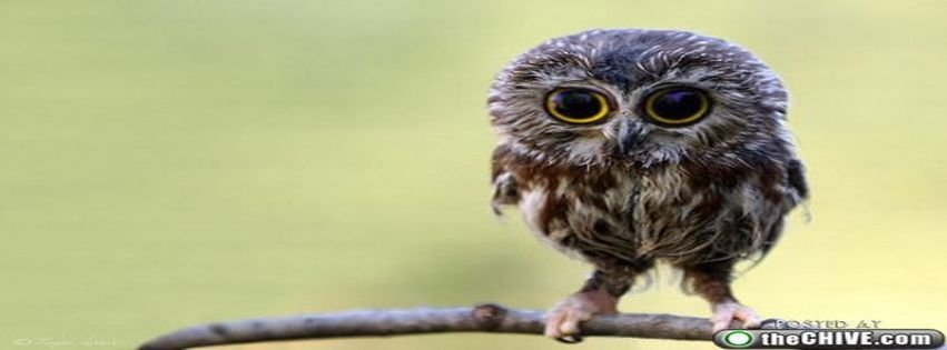 Awesome Baby Owl Super Cute Sweet Facebook Coevrs Facebook ...