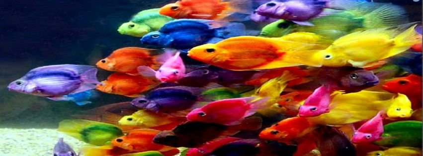 Colorful fish in ocean - photo#8
