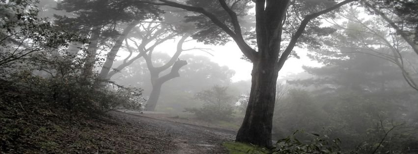 Beautiful Place Trees X Facebook Covers Myfbcovers Picture To Pin On Pinterest Thepinsta
