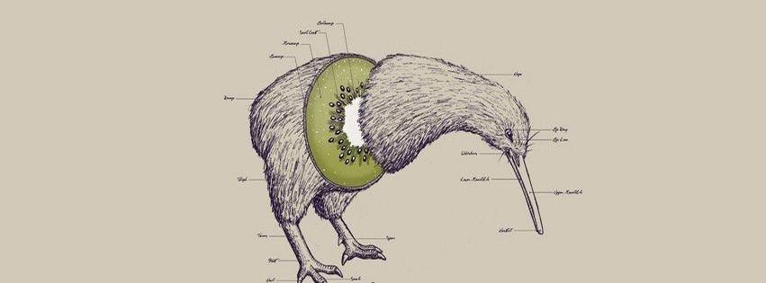Best Kiwi Bird Fruit Facebook Covers - myFBCovers