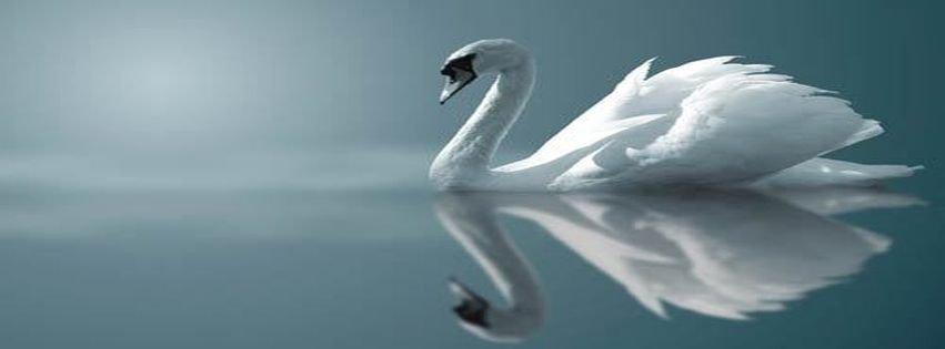 Facebook Covers Animal Art Beautiful Bird Blue Facebook ...