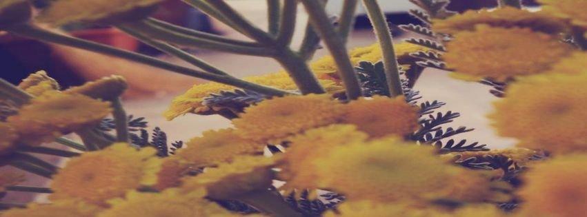 Flower flowers yellow beautifull cute art photography for Fresh art photography facebook