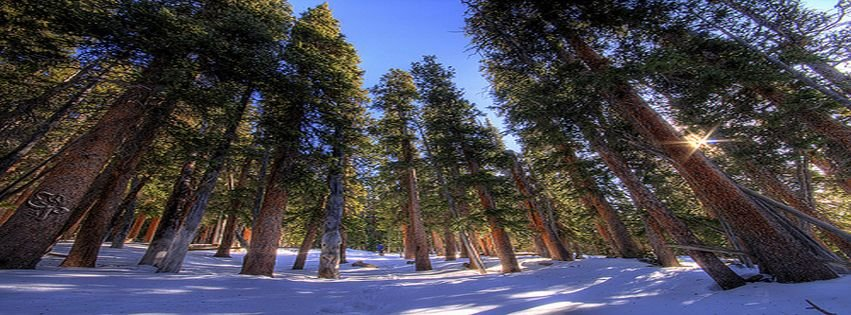 Nature Photography Snow Trees Winter Facebook Cover Facebook Covers Myfbcovers