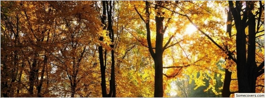 Beautiful Fall Trees Facebook Timeline Cover Facebook