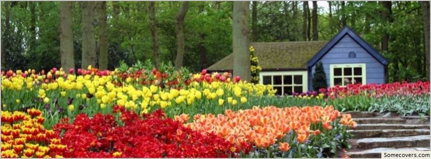 Beautiful keukenhof facebook timeline cover