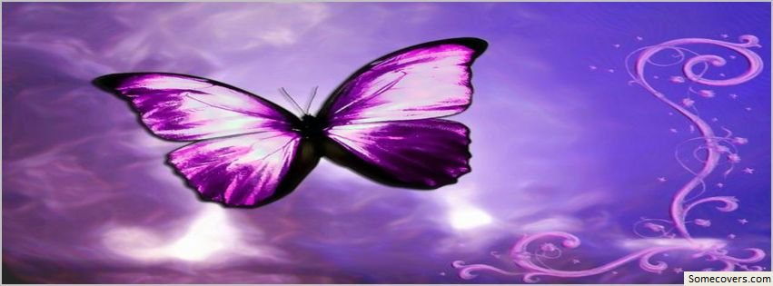 Butterfly Life Violet Awesome Facebook Timeline Cover