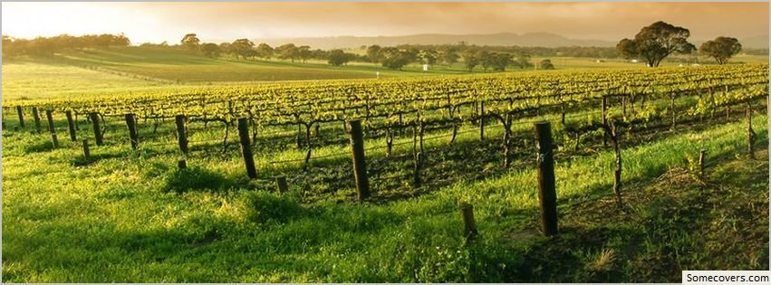 French Vineyard Facebook Covers Myfbcovers