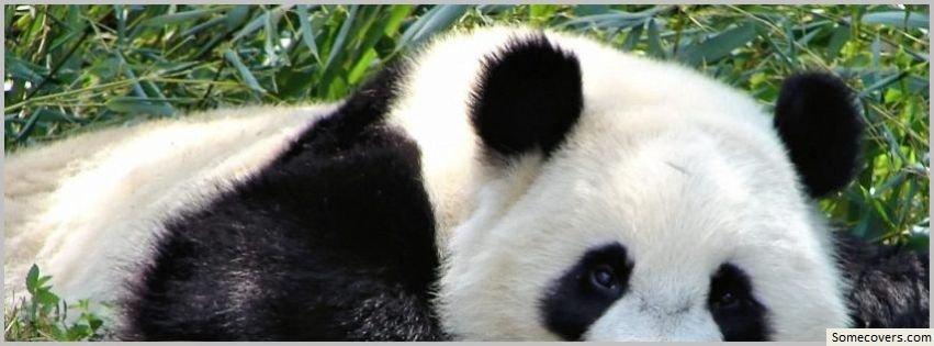 funny panda facebook timeline -#main