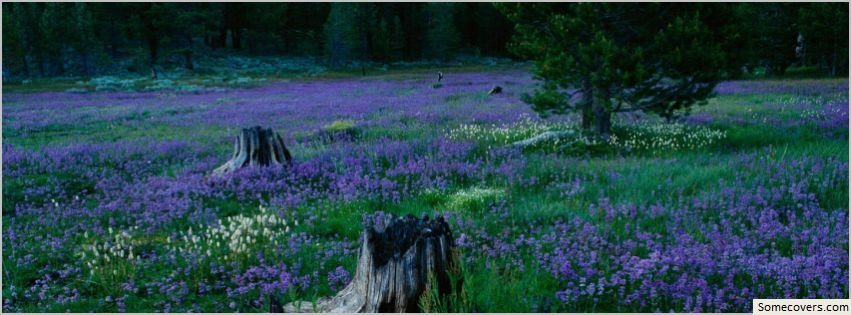 Lavender Flowers Field Facebook Timeline Cover