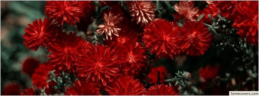 Red Flowers Facebook Timeline Cover Facebook Covers - myFBCovers