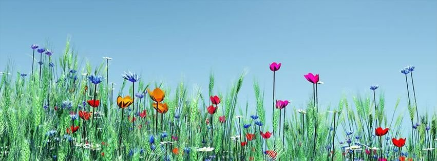 Nature facebook covers myfbcovers spring flowers sunny day facebook cover downloads8 created2013 01 02 mightylinksfo